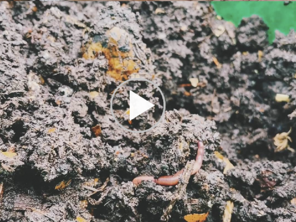 Making Compost Video: Vermiculture II