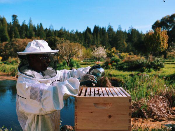New Italian Bees