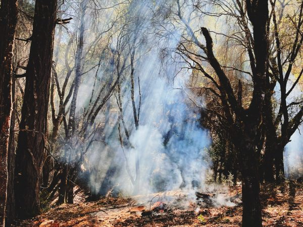 Purposeful Fire
