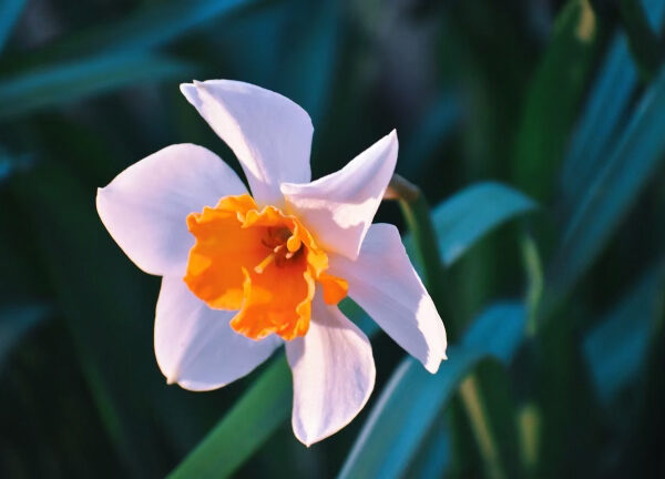 Informed by a Daffodil
